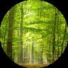 Nossa empresa respeita o meio ambiente e a sustentabilidade. Temos registro junto ao IBAMA (Instituto Brasileiro do Meio Ambiente e dos Recursos Naturais Renováveis) e ao SEAPI (Secretaria da Agricultura, Pecuária e Irrigação)
